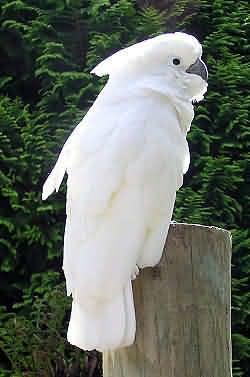 解析鹦鹉的行为语言(上)